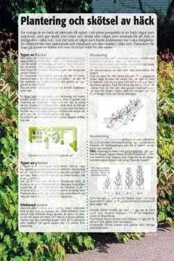 12. Plantering och skötsel av häck
