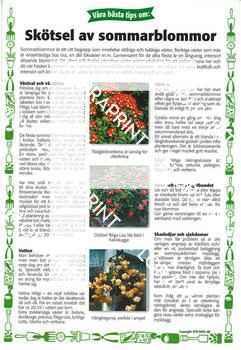 16. Skötsel av sommarblommor