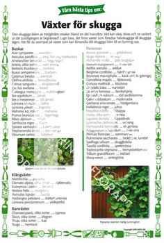 17. Växter för skugga