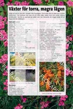 18. Växter för torra