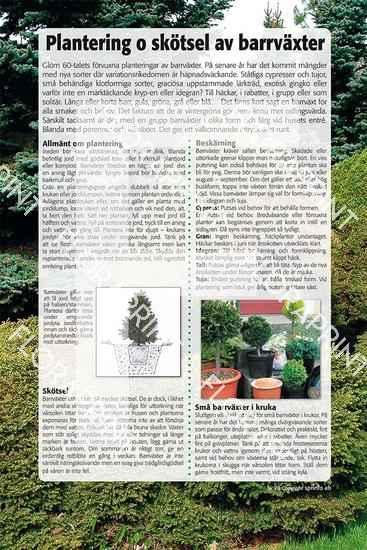 20. Plantering och skötsel av barrväxter