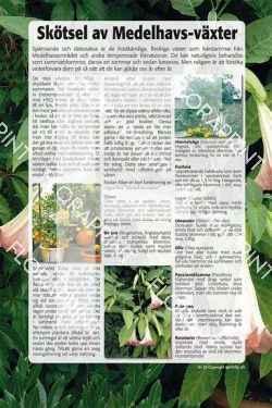22. Skötsel av Medelhavs-växter