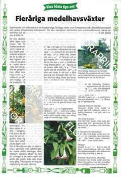 23. Fleråriga frostkänsliga medelhavsväxter