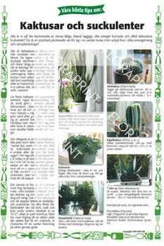24. Kaktusar och suckulenter