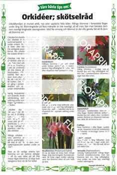 25. Orkidéer