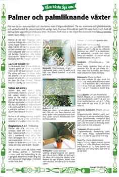27. Palmer och palmliknande växter