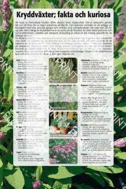 5. Kryddväxter