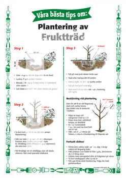 7. Plantering av fruktträd