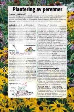 9. Plantering av perenner