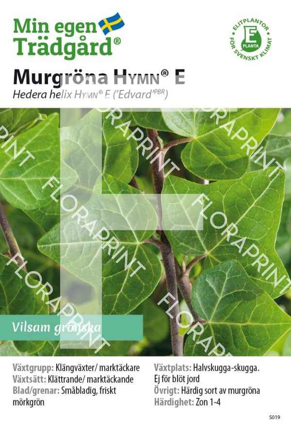 Hedera helix HYMN® E_HR