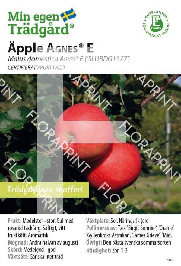 Malus 'AGNES® E_HR