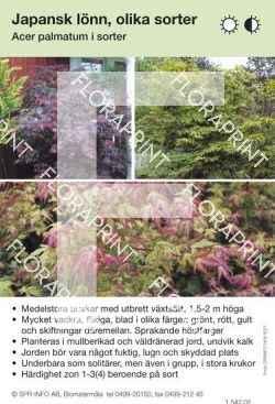 Acer palmatum allmän mix