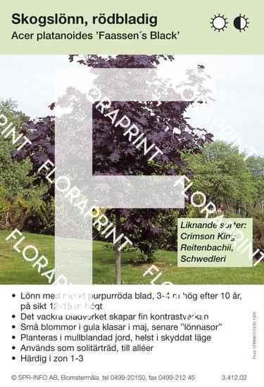 Acer platanoides Faasens Black (sorter)