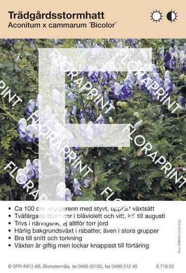 Aconitum cammarrum Bicolor