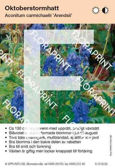 Aconitum carmichaelii Arendsii