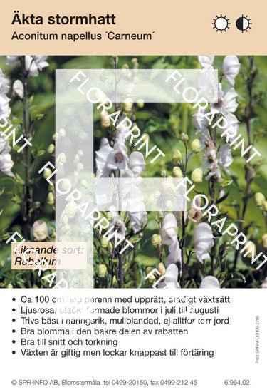 Aconitum napellus Carneum