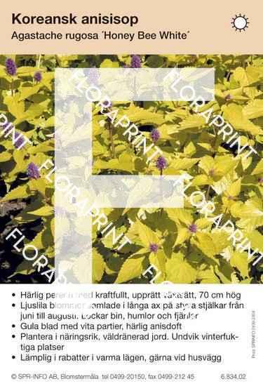 Agastache rugosa Honeybee White