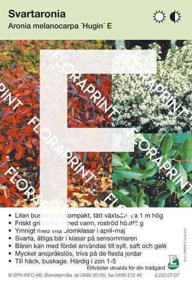 Aronia melanocarpa Hugin E