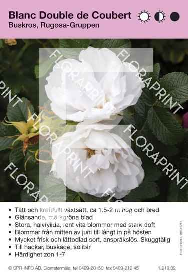 Blanc Double de Cobert