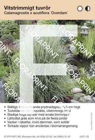 Calamagrostis acutifl Overdam