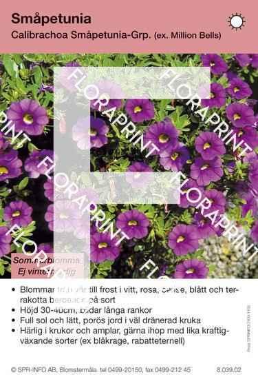 Calibrachoa Småpetunia-grp