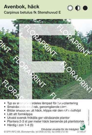 Carpinus betulus fk Stenshuvud E