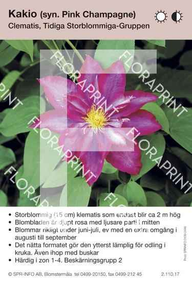 Clematis Kakio (syn Pink Champagne)
