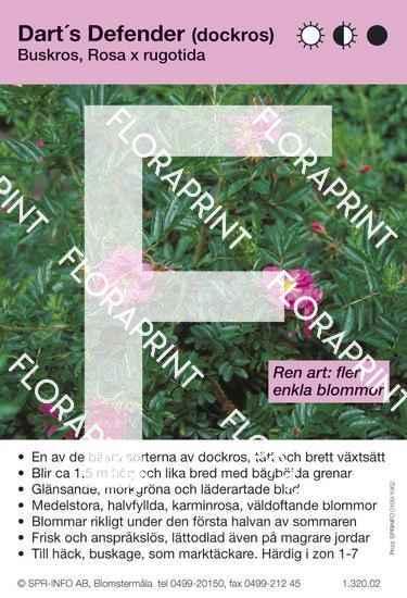 Dart´s Defender (Rosa nitida)