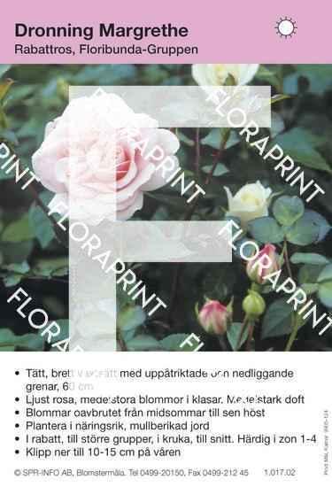 Dronning Margrethe