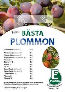 E-planta; Våra bästa plommon