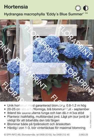 Hydrangea Macrophylla Eddys Blue Summer Spr Info