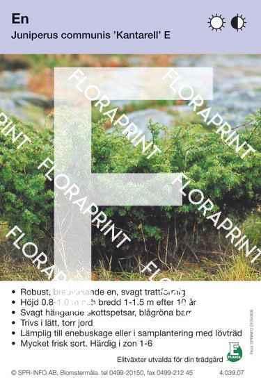 Juniperus com Kantarell E