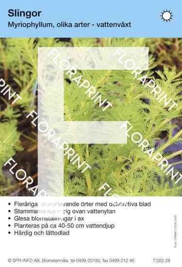 Myriophyllum