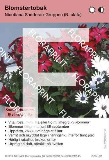 Nicotiana Sanderae-Grp (N. alata)