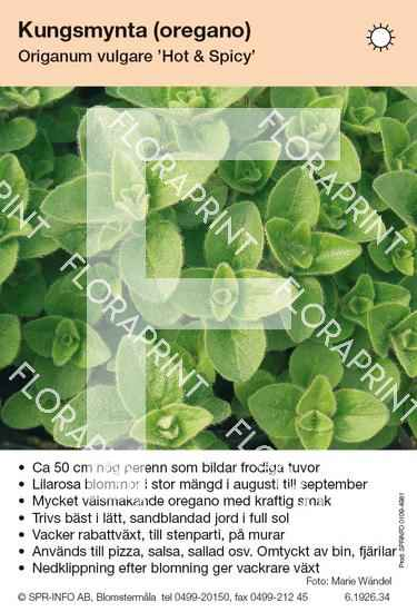 Origanum vulgare Hot & Spicy