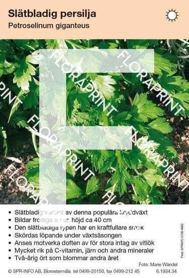 Petroselinum giganteus