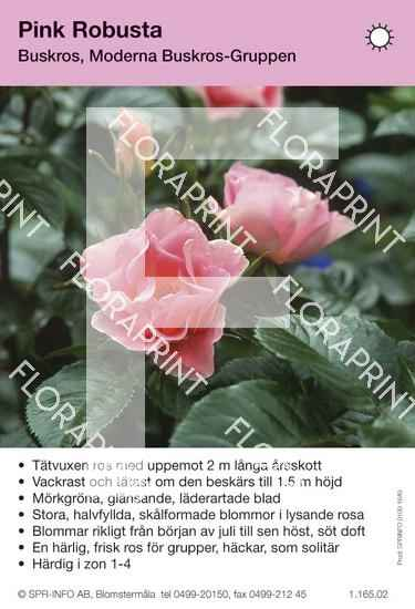 Pink Robusta