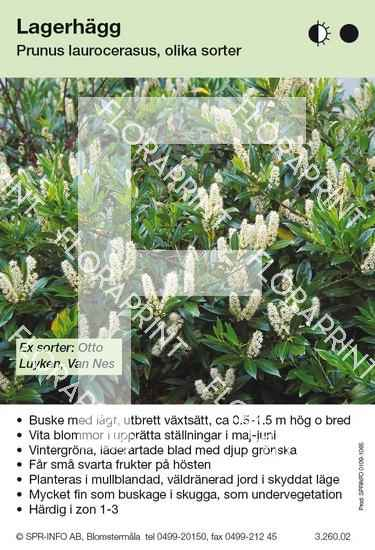 Prunus laurocerasus allmän