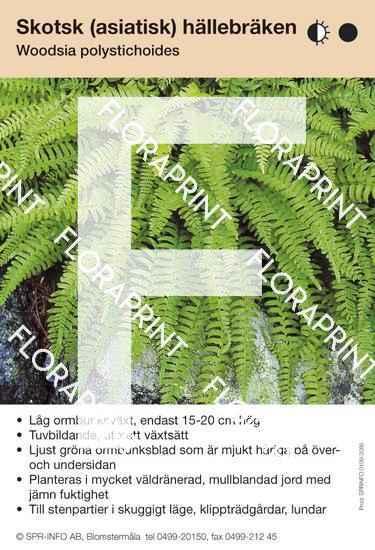 Woodsia polystichoides