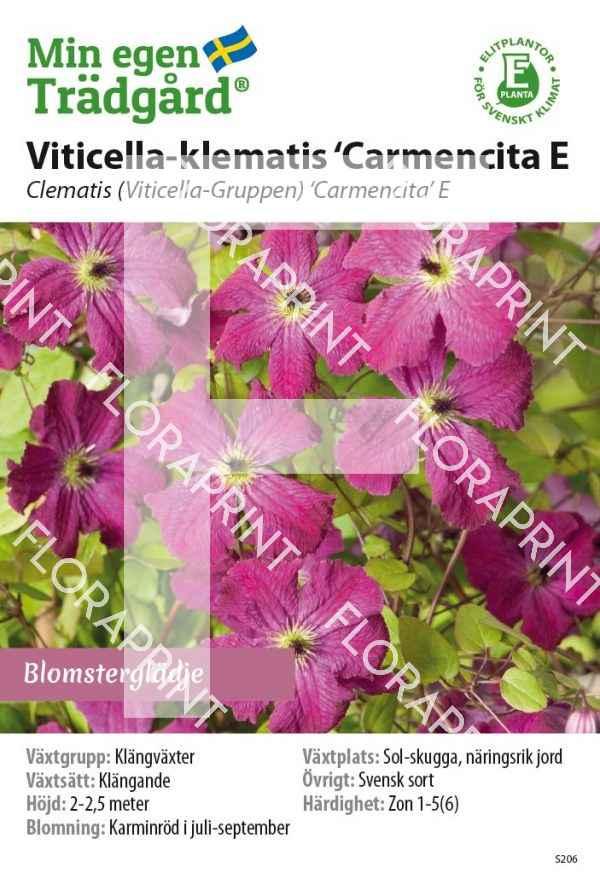 Cl Viticella 'Carmencita E_HR