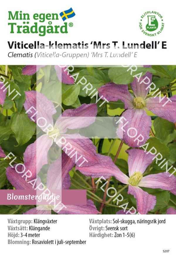 Cl Viticella Mrs_T_Lundell_E_HR