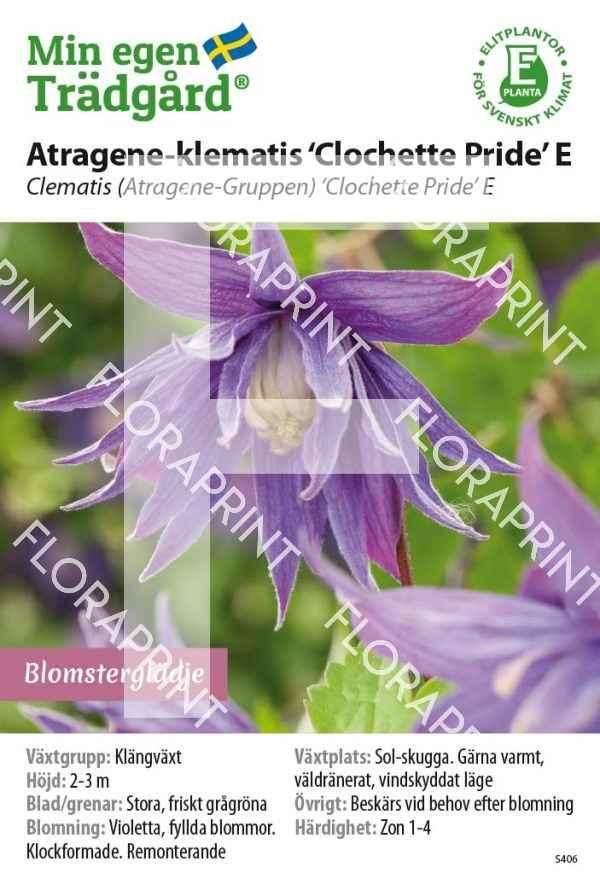 Clematis 'Clochette Pride' E MS GH OK