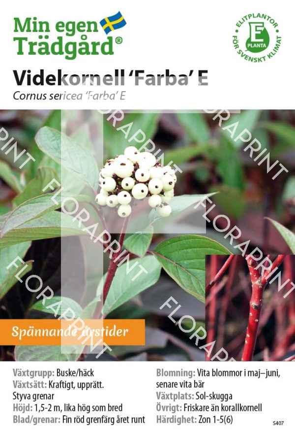 Cornus sericea 'Farba' E MS GH OK