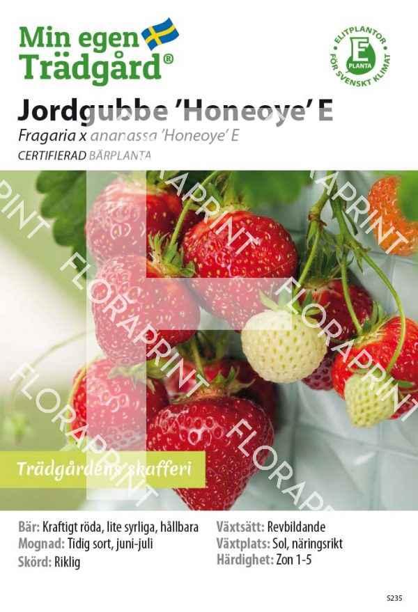 Fragaria 'Honeoye' E_HR