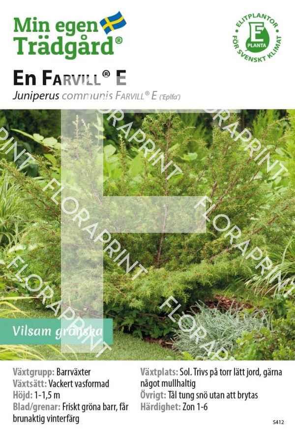 Juniperus communis FARVILL® E GH OK