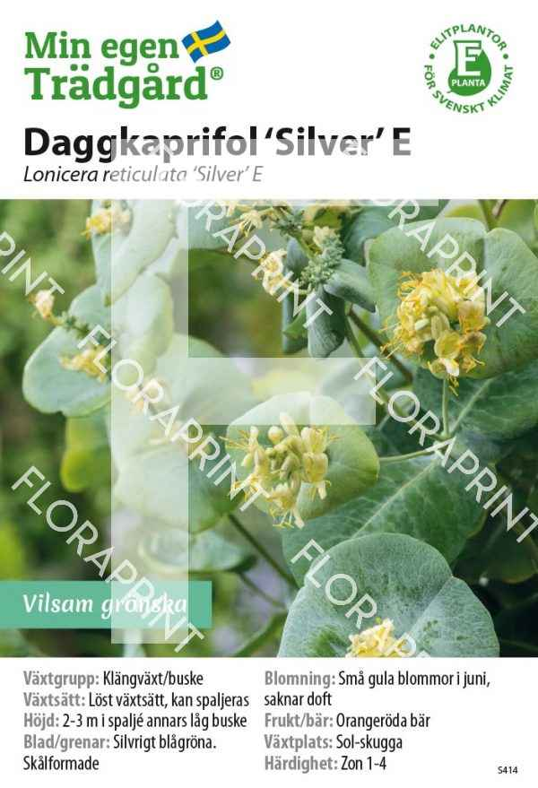 Lonicera reticulata 'Silver' E MS GH OK
